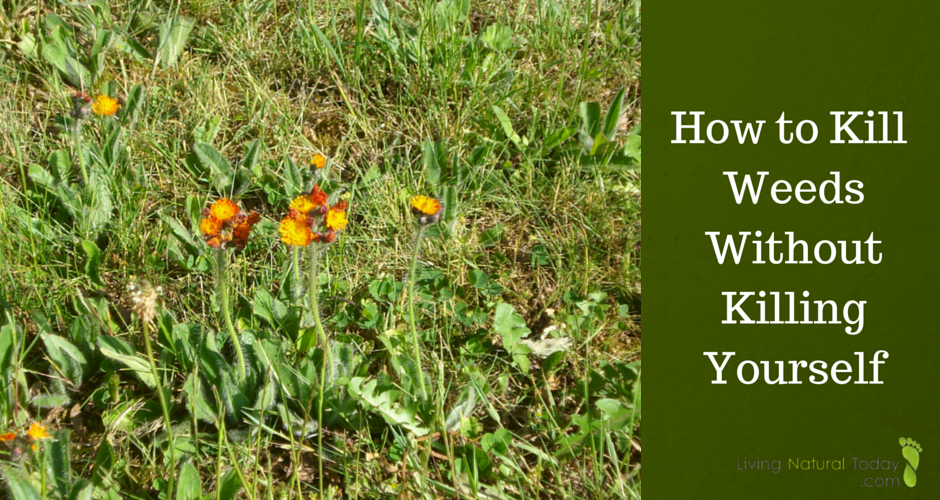 Kill Weeds without the use of harmful chemicals