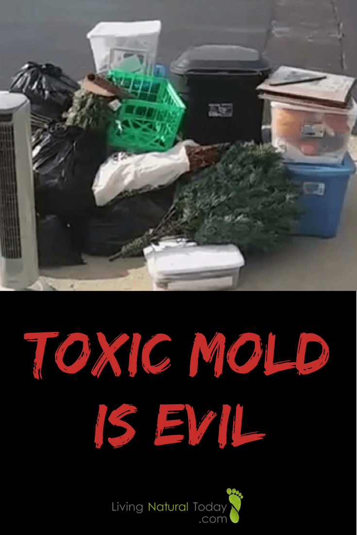 toxic mold is evil