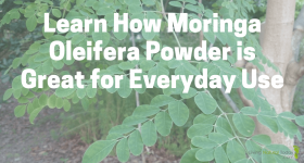 Learn How Moringa Oleifera Powder is Great for Everyday Use