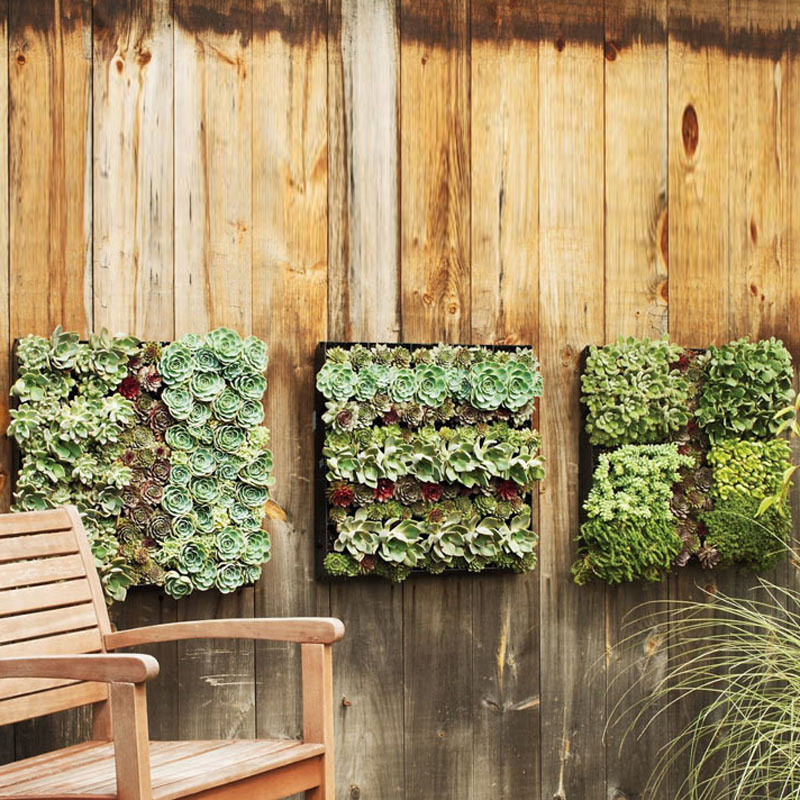 green wall for your landscaping ideas