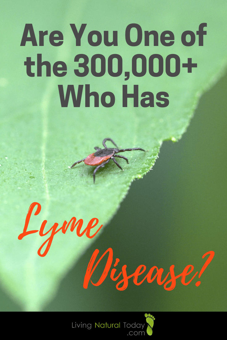whats lyme disease