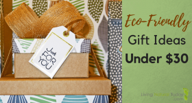 Eco-Friendly Gift Ideas Under $30