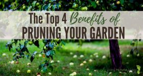 The Top 4 Benefits of Pruning Your Garden