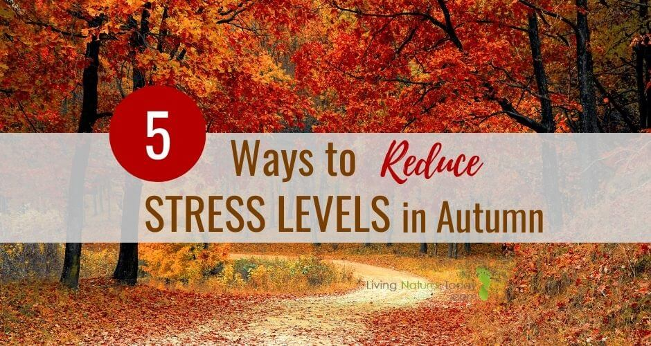how to reduce stress levels