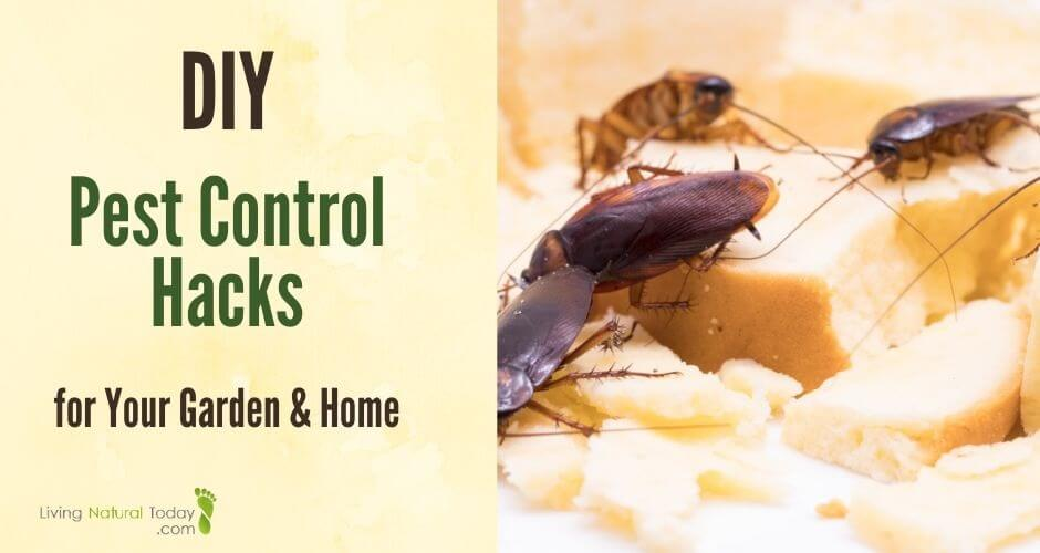 diy pest control for home